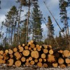 Could biofuel save Maine's timber industry?